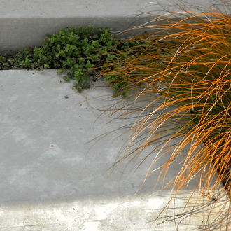 landscape design grass cement steps