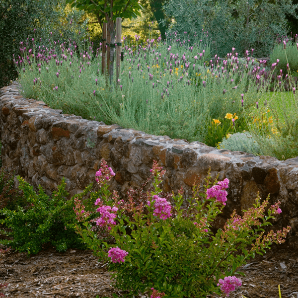 curved stone retaining wall flowering pants