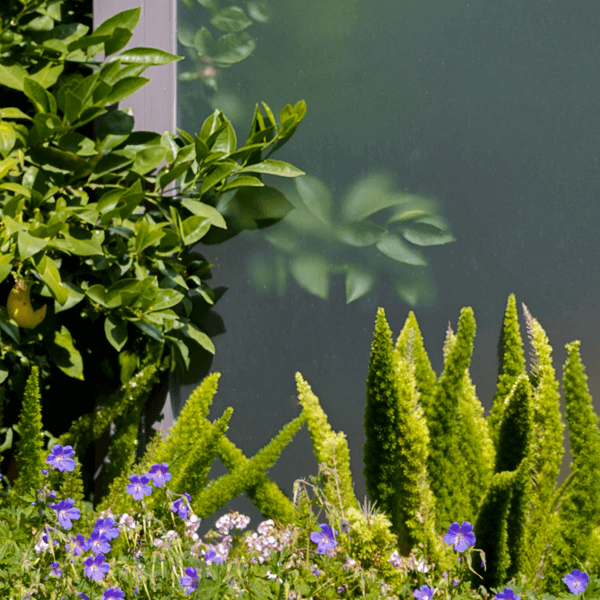 glass panel landscape architecture gardens