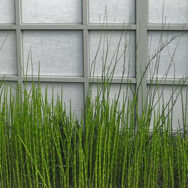 landscape design bamboo garden screen